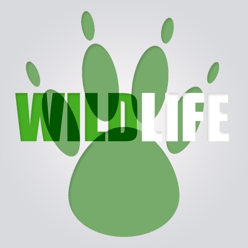 Album Art - Wildlife Preservations 003