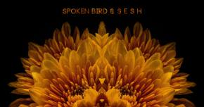Spoken Bird & s e s h gain some 'Perspective' Preview